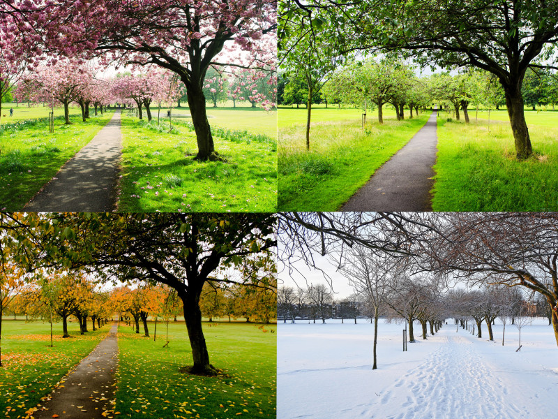 the-four-seasons